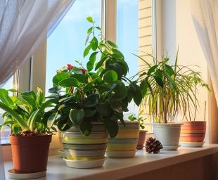 Η άνοιξη στο σπίτι μας – Ανανέωση με 10 απλούς τρόπους