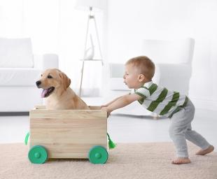 Σκυλάκι: Καθαρόαιμο ή ημίαιμο;